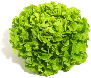 eichblattsalat